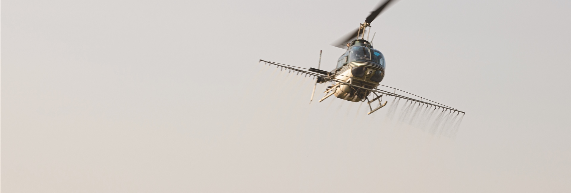 Read about the Helicopter Spraying for Phragmites Along the River